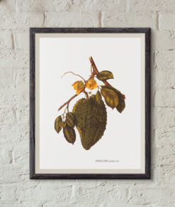 mockup-botanique-annona-muricata-onthewallagain