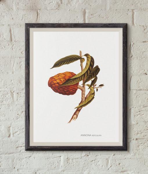 mockup-botanique-annona-reticulata-onthewallagain