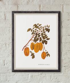 mockup-botanique-averrhoa-carambola-onthewallagain