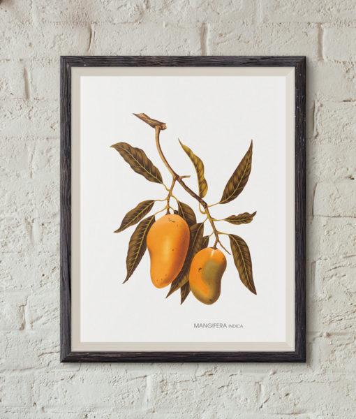 mockup-botanique-mangifera-indica-onthewallagain