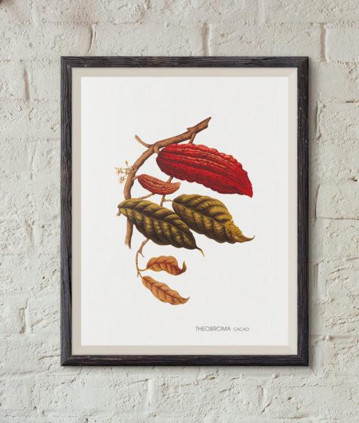 mockup-botanique-theobrama-cacao-onthewallagain